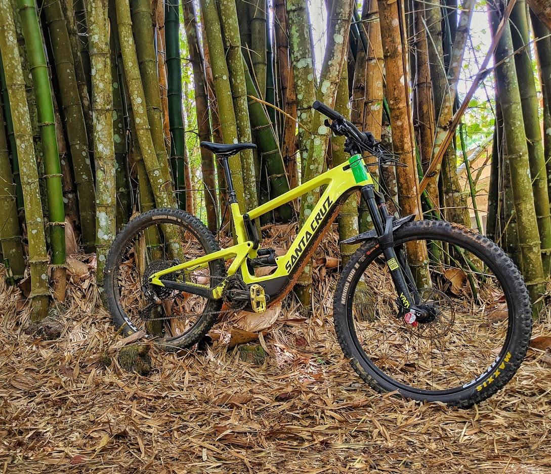 Santa Cruz Bamboo